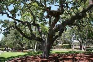 Michael Jackson's Giving Tree. Image taken from mjcommunity.com